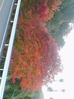 kyoto_1113_1.jpg