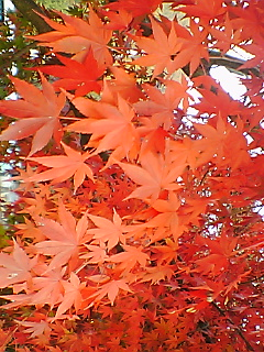 kyoto_1113_2.jpg