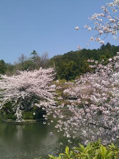 ryoanji_003.jpg